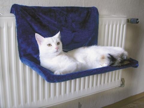 kočka 1 zavěsit