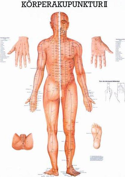 Rudiger Anatomie Akupunkturni Body Na Lidskem Tele Predni A Zadni